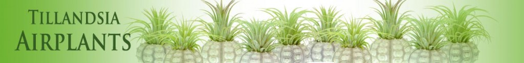 https://www.craftyplants.co.uk/wp-content/uploads/2016/01/Long-airplants-banner-e1472610606151.jpg