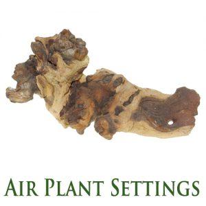 Air plant settings