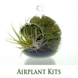 Airplant Terrarium Kits