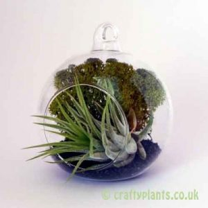 Craftyplants Airplant Kit A