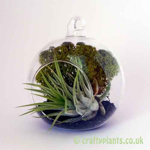 Hanging glass ball / Airplant Terrarium KIT A