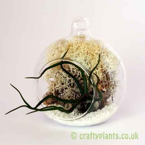 Hanging glass ball Airplant Terrarium KIT B