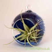 Craftyplants Airplant Kit C