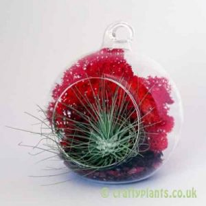 Craftyplants Airplant Kit E