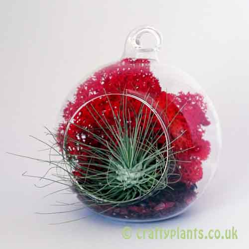 Hanging glass ball / Airplant Terrarium KIT E