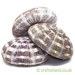 3 pack of 8-10cm Natural Alfonso Sea Urchins by craftyplants.co.uk