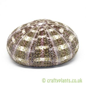 8-10cm Natural Alfonso Sea Urchin by craftyplants.co.uk