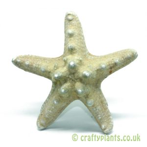 8-12cm Natural knobbly starfish by craftyplants