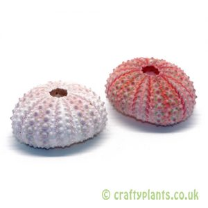 Natural pink sea urchin shells by craftyplants.co.uk