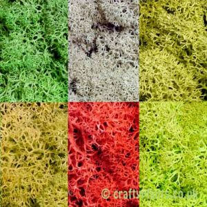 6 pack of 25g reindeer moss by craftyplants.co.uk