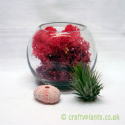 avec-amour-small-tillandsia-airplant-terrarium-kit-[4]-689-p