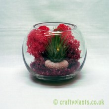 avec amour small tillandsia airplant terrarium kit
