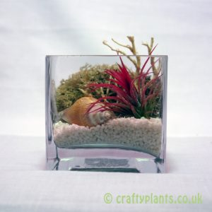 cubo de fuego beach air plant kit