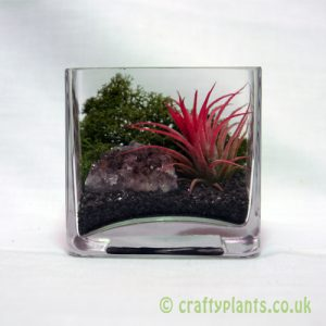 cubo de fuego forest airplant kit