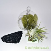 hanging-glass-ball-airplant-terrarium-kit-a-[3]-120-p