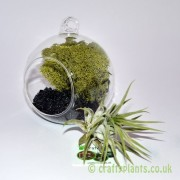 hanging-glass-ball-airplant-terrarium-kit-a-[4]-120-p