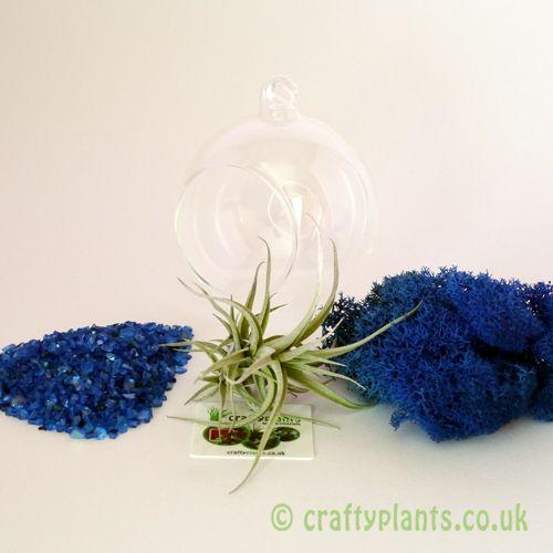 Hanging Glass Ball Airplant Terrarium Kit C