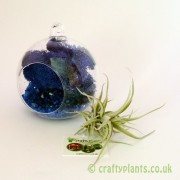 hanging-glass-ball-airplant-terrarium-kit-c-[4]-1516-p
