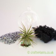 hanging-glass-ball-airplant-terrarium-kit-d-[2]-1522-p