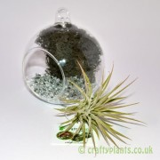 hanging-glass-ball-airplant-terrarium-kit-d-[4]-1522-p