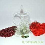hanging-glass-ball-airplant-terrarium-kit-e-[2]-1528-p