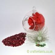 hanging-glass-ball-airplant-terrarium-kit-e-[3]-1528-p