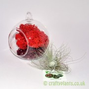 hanging-glass-ball-airplant-terrarium-kit-e-[4]-1528-p