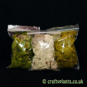 reindeer-moss-3-colour-selection-pack-25g-x-3-1259-p