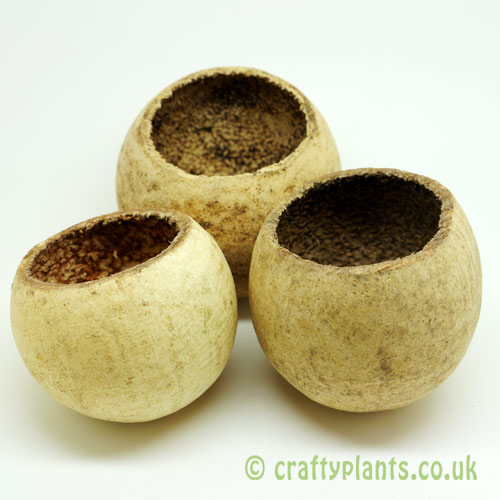 Bell cup - pack of 3 by craftyplants