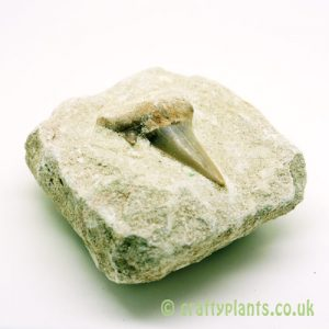 Shark Tooth on Rock in gemstones by Craftyplants