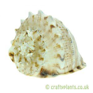 Horned Helmet Shell from craftyplants