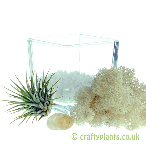 Elements Airplant Kit - AIR gravel added from craftyplants