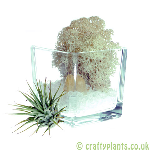 Elements Airplant Kit - AIR adding stone by craftyplants