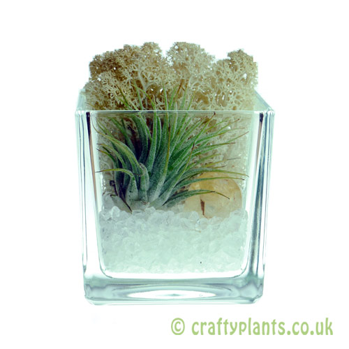 Elements Airplant Kit - AIR completed by craftyplants