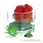 Elements Airplant Kit - FIRE adding moss by craftyplants