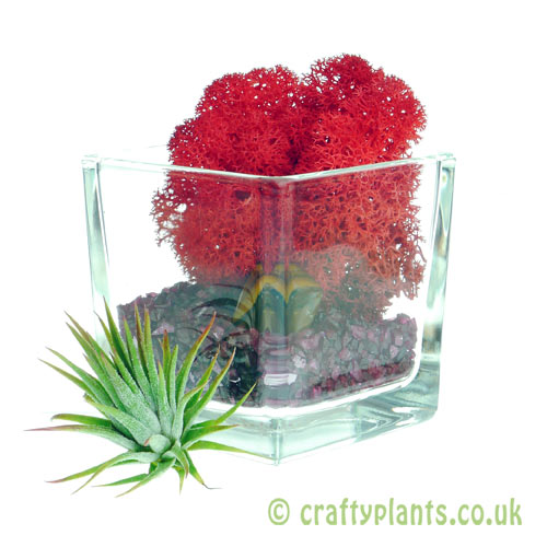 Elements Airplant Kit - FIRE adding stone by craftyplants