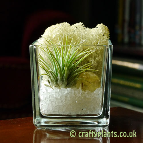 Elements Airplant Kit - AIR by craftyplants