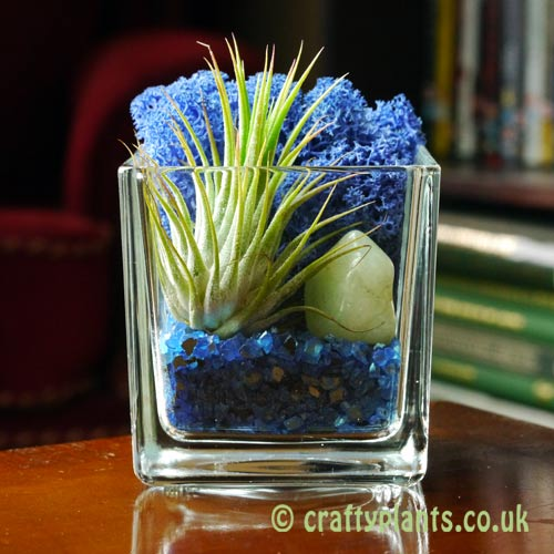 Elements Airplant Kit - WATER by craftyplants