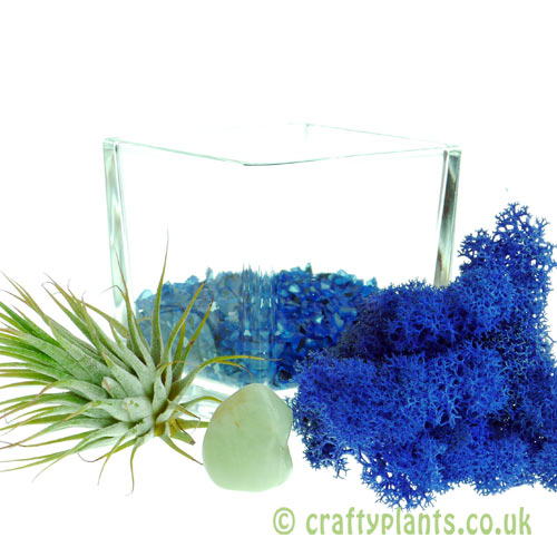 Elements Airplant Kit - WATER with gravel by craftyplants.co.uk