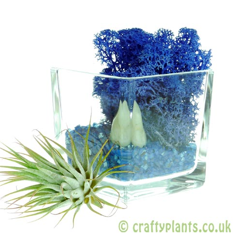 Elements Airplant Kit - WATER adding stone by craftyplants