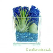 Elements Airplant Kit - WATER completed by craftyplants
