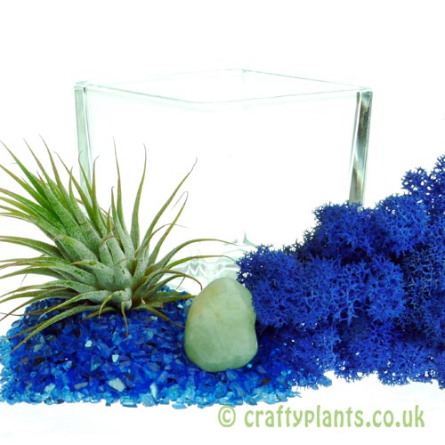 Elements Airplant Kit - WATER components by craftyplants