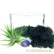 Elements Airplant Kit – AETHER