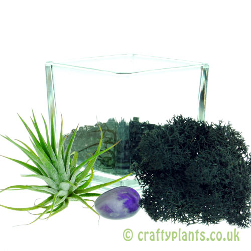 Elements Airplant Kit - AETHER adding gravel by craftyplants