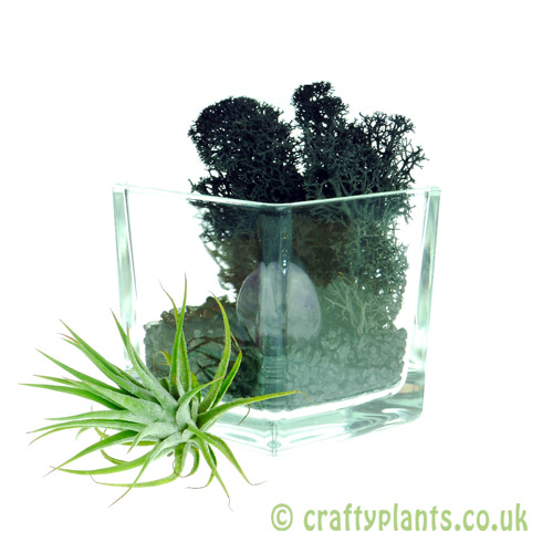 Elements Airplant Kit - AETHER adding stone from craftyplants