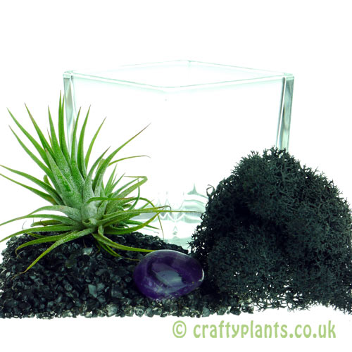 Elements Airplant Kit - AETHER components by craftyplants