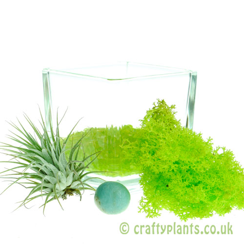 Elements Airplant Kit - EARTH adding gravel by craftyplants