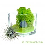 Elements Airplant Kit - EARTH stone added by craftyplants