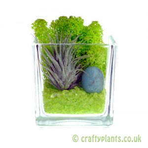 Elements Airplant Kit - EARTH complete by craftyplants