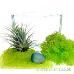Elements Airplant Kit - EARTH components by craftyplants